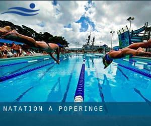 Natation poperinge flandre occidentale r gion flamande belgique cours de natation - Piscine poperinge ...